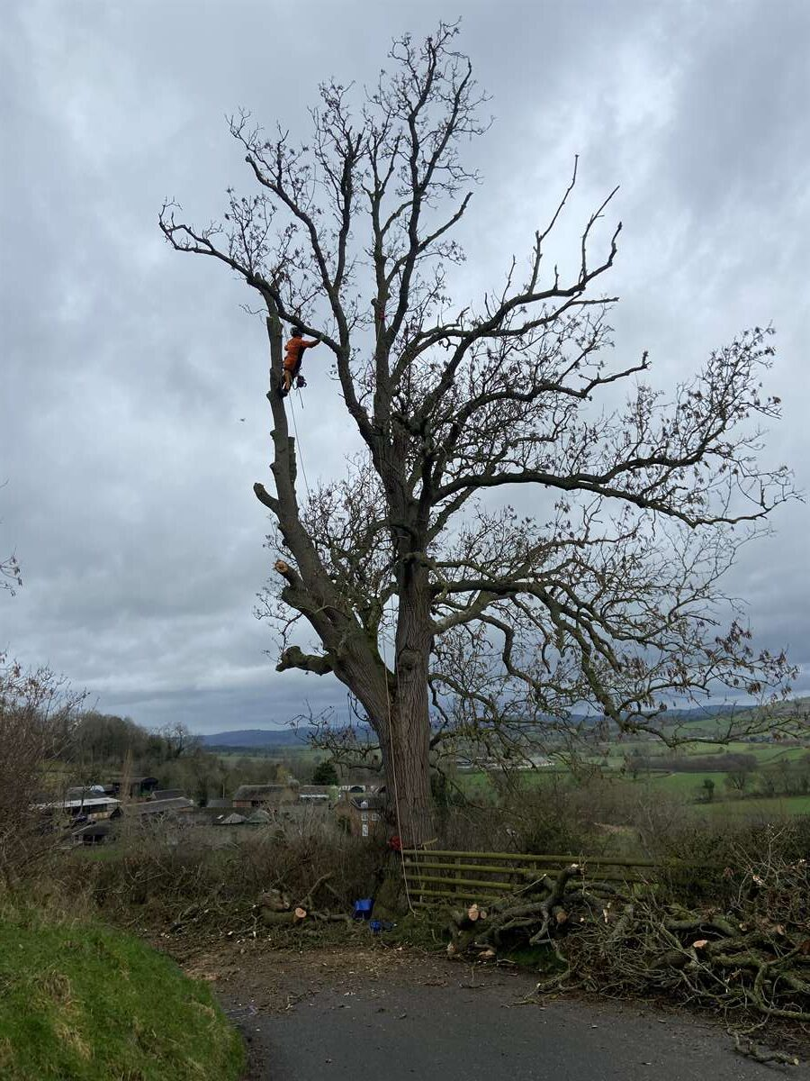 tree surgeons in shropshire and powys